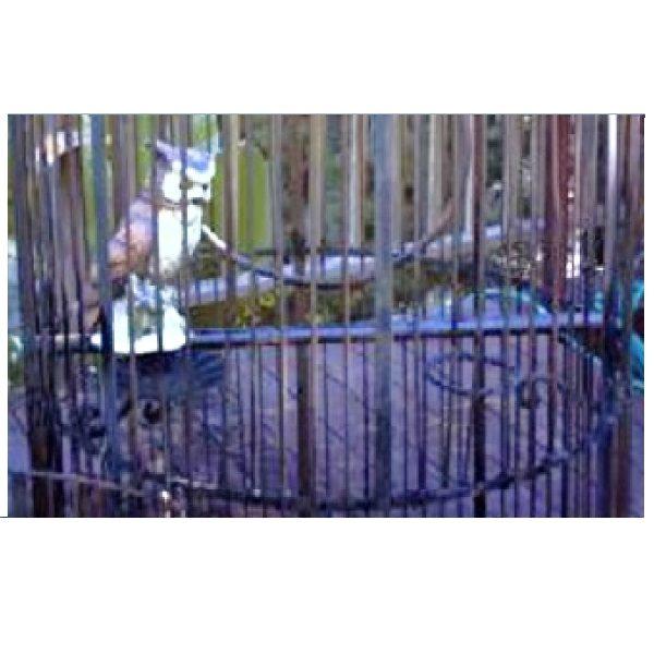 Wrought Iron Birdcage XL perch close up
